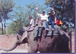 2018 India Day 10 Jaipur Elephants